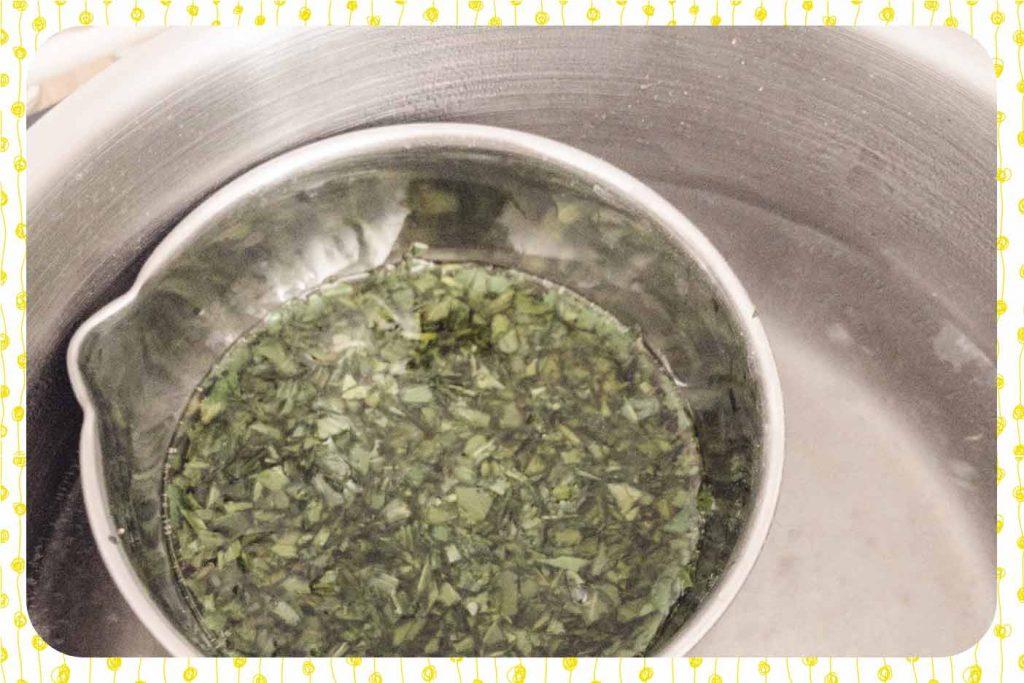 Macération des feuilles de plantain dans l'huile au bain-marie.